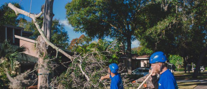 Palm-Tree-Removal