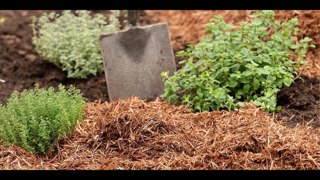 benefits-of-mulching