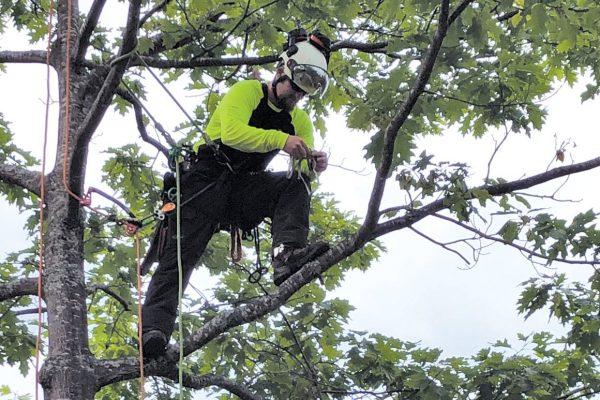 certified arborist training school