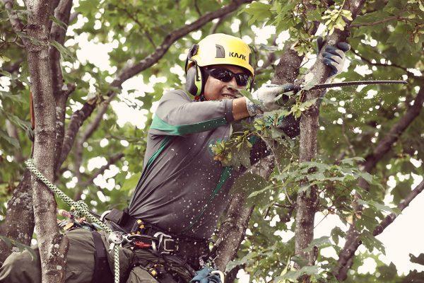 tree doctor