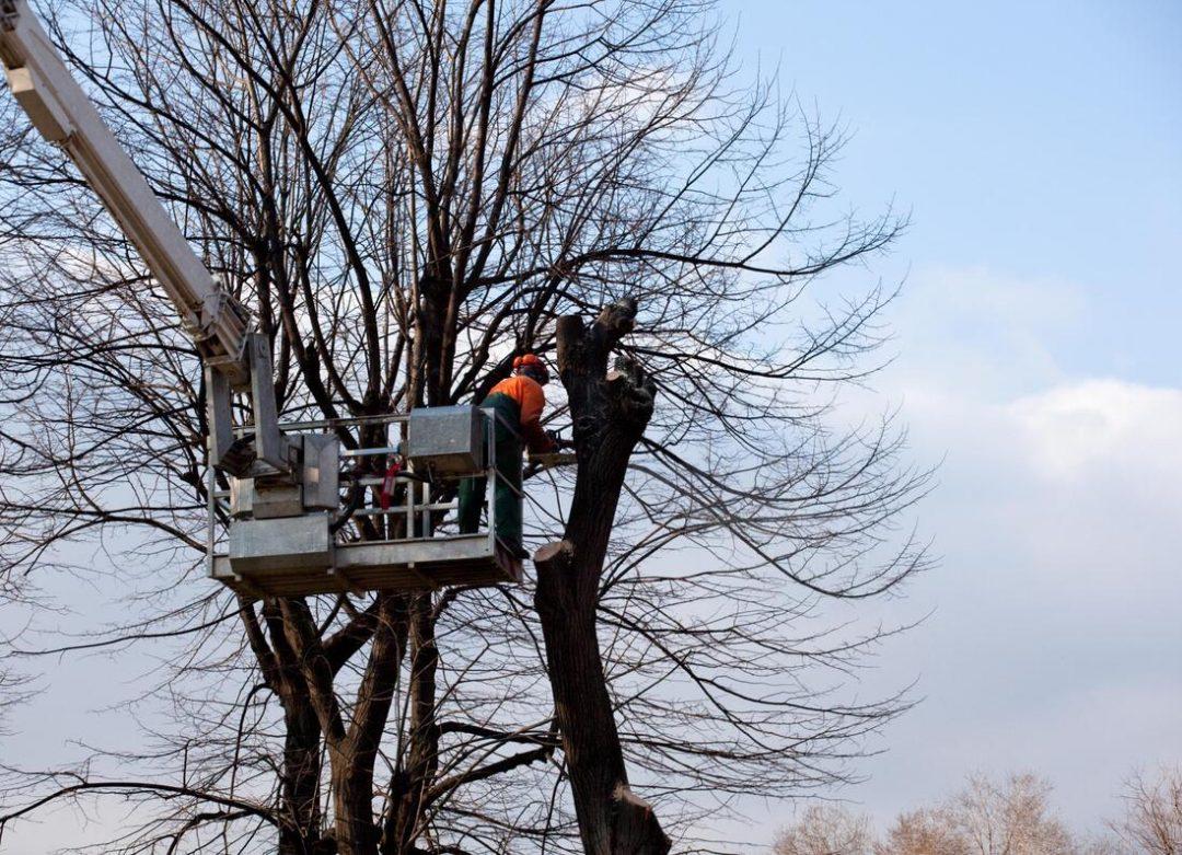 trimming-tree-service